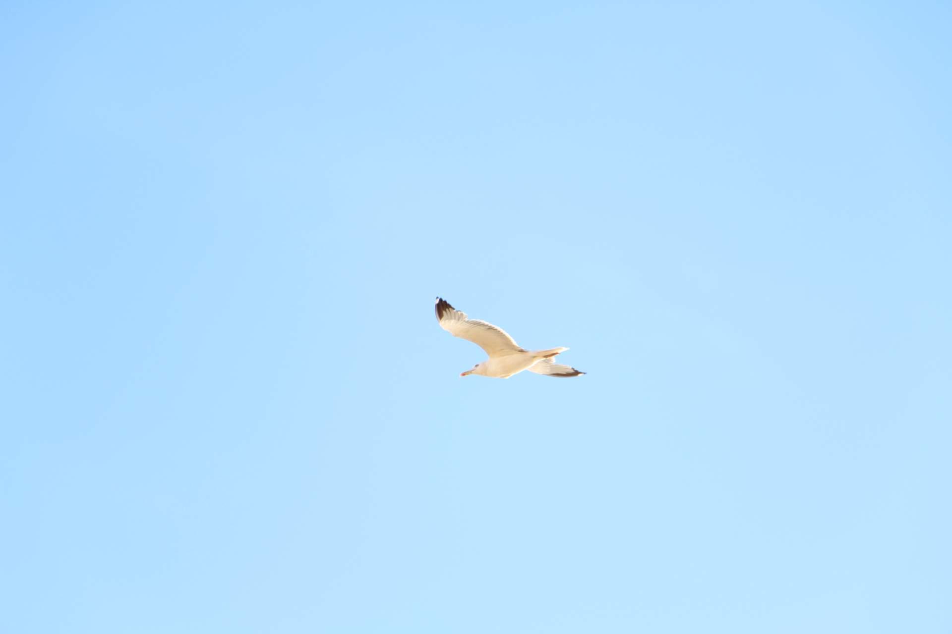 Möwe fliegt vorbei
